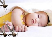 Mẹo hay giúp trị vết muỗi đốt cho trẻ sơ sinh nhanh chóng