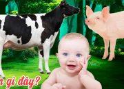 Con Gì Đây 🐄 Dạy Bé Học Con Vật Tiếng Kêu, Hình Ảnh Con Bò, Lợn, Chó, Mèo, Vịt, Gà, Báo | Gà Con TV