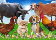 Dạy bé các con vật | bé đọc tên động vật rừng , nông trại | giúp bé phát triển tư duy  # 18