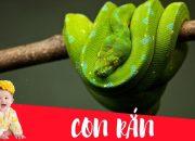 Dạy bé học con rắn | Dạy em bé tập nói tên và hoạt động các con vật