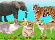 dạy bé học các con vật yêu thích nhất – động vật rừng – nông trại -vật nuôi trong gia đình – pat 9