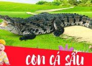 Dạy bé học con cá sấu | Dạy em bé tập nói tên và hoạt động các con vật