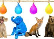 Dạy các con vật và màu sắc cho bé ngoan và vâng lời