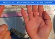 Dạy toán cho bé 4 – 6 tuổi | Học phép tính cộng | Học toán finger math | Maths9m