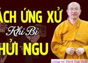 Bị Chửi Ngu – Xỉ Nhục Người Thân và cách ứng xử khi bị chửi | Thầy Thích Trúc Thái Minh