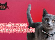 Làm Sao Để Dạy Mèo Cưng Nhà Bạn Vâng Lời Và Sống Có Khuôn Khổ? | Meow | Coi Là Ghiền