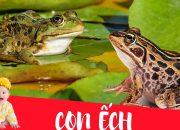 Dạy bé học con ếch | Dạy em bé tập nói tên và hoạt động các con vật