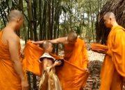 Phim phật giáo hay CÁCH Dạy Con Của Đức Phật Bậc Làm Cha Mẹ Thì Phải Biết, Chuyện Nhân Quả Phật Giáo