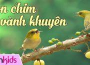 Chim Vành Khuyên – Dạy Bé Tập Hát Chim Vanh Khuyen Nho