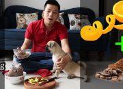 Dạy chó đi vệ sinh đúng nơi quy định (mẹo) – thành công dễ dàng – Chó Pug – Pugk Vlog