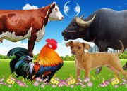 Dạy bé các con vật – bé đọc tên động vật rừng , nông trại – giúp bé phát triển tư duy # 15