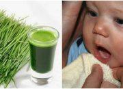 Tác dụng của lá hẹ đối với trẻ sơ sinh